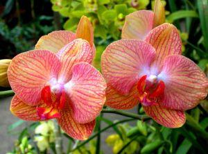 За орхидеями в домашних условиях